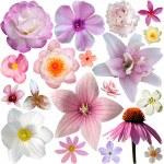koleksiyon üzerinde beyaz izole pembe yaz çiçek — Stok fotoğraf #76428767
