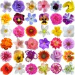 Big Selection of Various Flowers Isolated on White Background — Stock Photo #76506589
