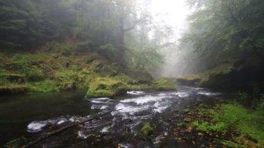 River Kamenice in foggy autumn day, Bohemian Switzerland, Czech Republic — Stock Video