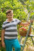 Jongen met mand met appelen en een ladder — Stockfoto