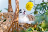 Petit chaton assis dans un panier sur pelouse floral — Photo