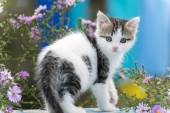 Motley kitten standing on  background of flowers — Stock Photo