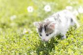 Kitty is on the background field of daisies — Stock Photo