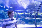 The boy in Oceanarium considers fish — Stock Photo
