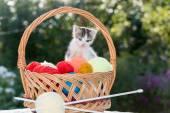 White kitten plays  balls of yarn — Stock Photo