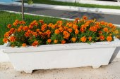 Flowerbed with orange marigold flowers in garden — Stock Photo
