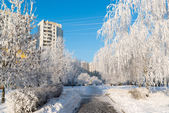 Snow-covered trees in the city of Moscow, Russia — Stock Photo