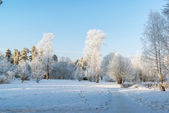 Beautiful winter forest on sunny day — Stock Photo