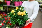 Woman holding a flowers working in agreenhouse at garden center — Stock Photo