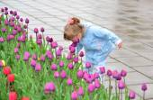 Little girl near the flower beds with tulips — Stock Photo