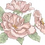Wild rose — Stock Vector #61583975