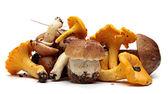 Wild Foraged Mushroom selection isolated on white background,  Boletus Edulis mushrooms — Stock Photo