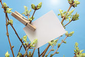Message written  white card hanging on green leafy branch by wooden clothes peg. — Stock Photo