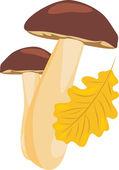 Mushrooms and oak leaf — Stock Vector