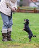 Outdoor lessons with dog — Stock Photo