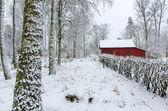 Swedish winter colors — Stock Photo
