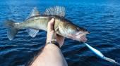 Snoekbaarzen visserij landschap — Stockfoto