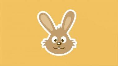 Happy rabbit — Stock Video