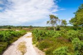 Dorset Heathland Track at Arne — Stockfoto