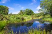 Pond at Arne in the Dorset Countryside — Stock Photo