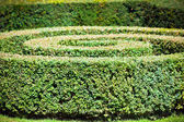 Green hedge labyrinth — Stock Photo