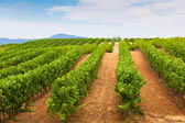 Diminishing rows of Vineyard Field in Southern France — Stock Photo