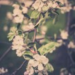 Blooming apple tree branches background — Stock Photo #66795511