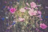 Wildflowers on a meadow — Stock Photo