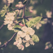 Blooming apple tree branches — Stock Photo #67254787