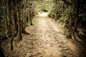 Mystery path throw the woods — Stock Photo