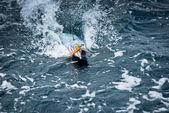 Pesci sul gancio nell'oceano — Foto Stock