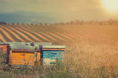 Beehives on the sunflower field — Stock Photo