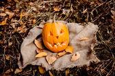 тыква хэллоуина — Стоковое фото
