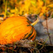 Halloween pumpkin on leaves — Stock Photo #55569497