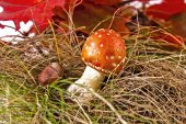 Toadstool in forest — Stock Photo