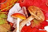 Autumn leaves and mushrooms — Stock Photo