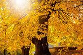 Colorful foliage in autumn park — Stock Photo