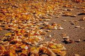 Golden autumn leaves on ground. — Stock Photo