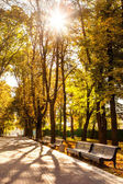 Row of benches in autumn park — Stock Photo