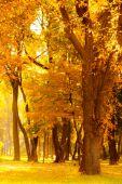 Sunrise in autumn forest — Stock Photo
