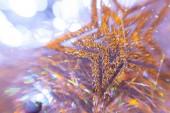 Christmas star on the lights — Zdjęcie stockowe