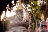 Macaque monkeys at Swayambhunath monkey temple — Stock Photo