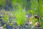 Green Summer Grass — Stock Photo