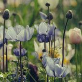 Bahar zaman çayır üzerinde yabani çiçek çiçeklenme — Stok fotoğraf