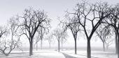 Transparent winter air — Stock Photo