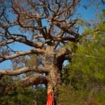 Beautiful lady and mighty tree — Stock Photo #55908691
