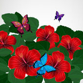 Floral design background. Hibiscus flowers with butterflies. — Stok Vektör