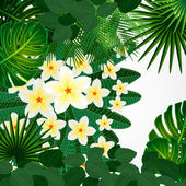 Eps10 Floral design background. Plumeria flowers and tropical le — Stock Vector