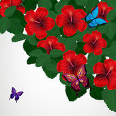 Floral design background. Hibiscus flowers with butterflies. — Wektor stockowy
