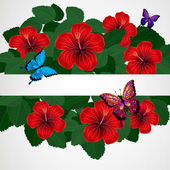 Floral design background. Hibiscus flowers with butterflies. — Stock Vector